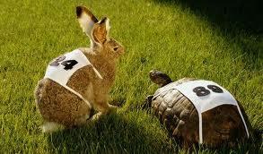 Lepre e tartaruga