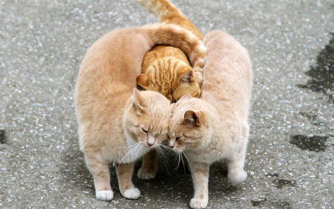 amore_e_amicizia_tra_animali_8.jpg